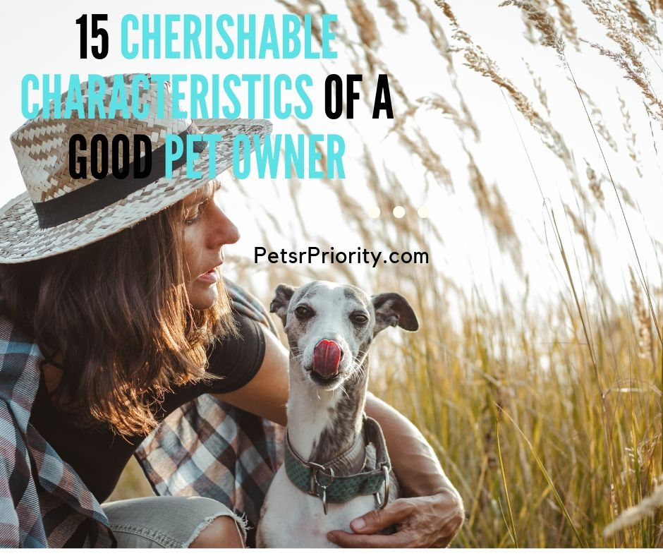15 Cherisable characteristics of a good Pet Owner