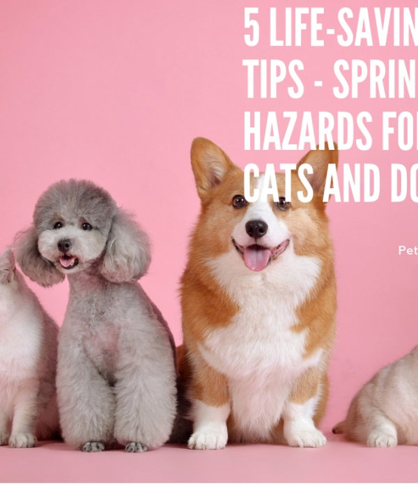 5 Life-Saving Tips – Spring hazards for cats and dogs
