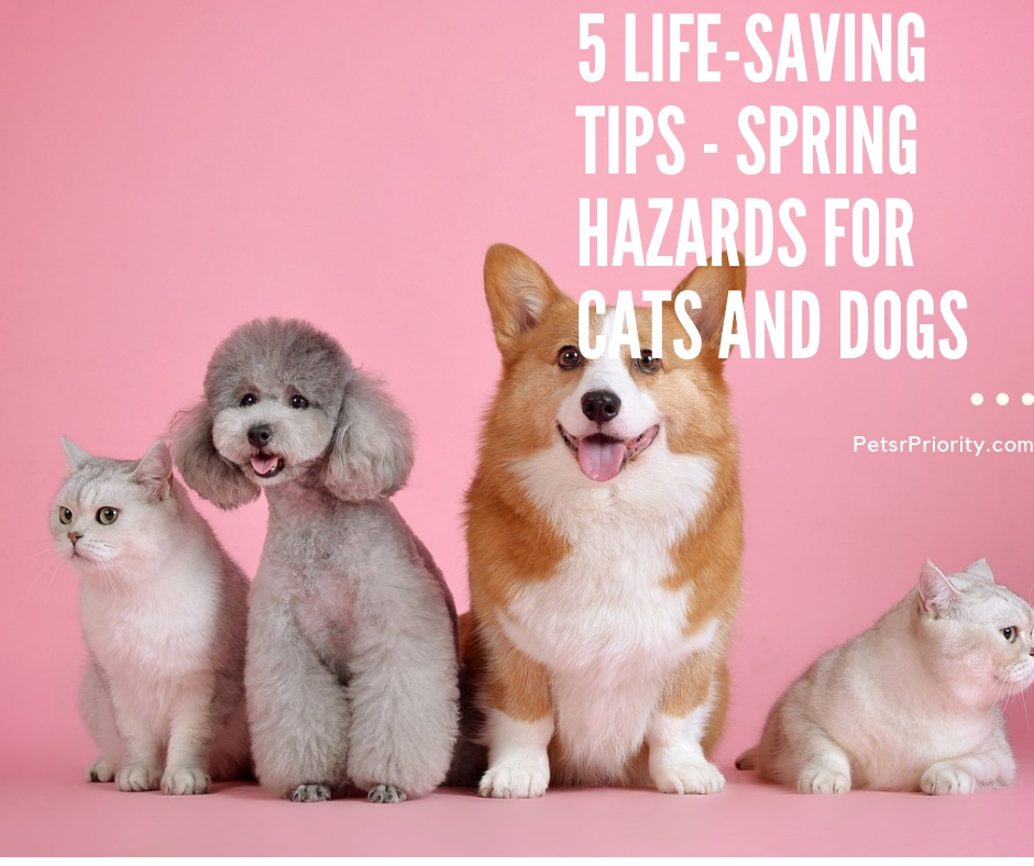 5 Life-Saving Tips - Spring hazards for cats and Dogs