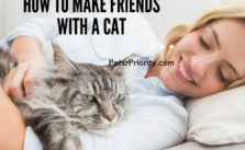 5 Unthinkable Ways - How to make friends with a cat