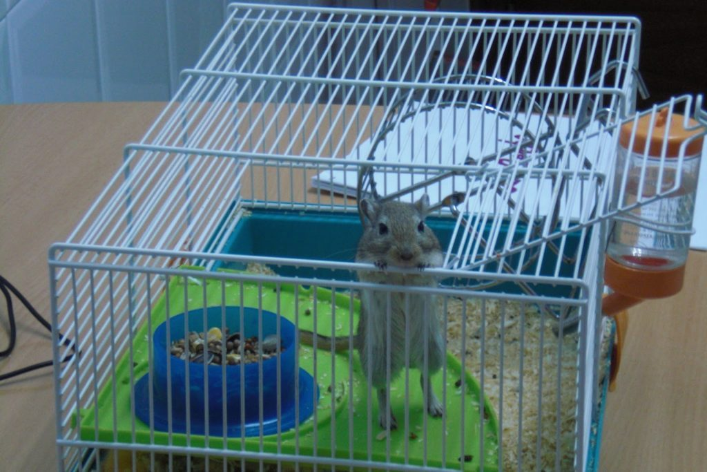 Best Cage for gerbils - Buying Guide, Opinions and Analysis