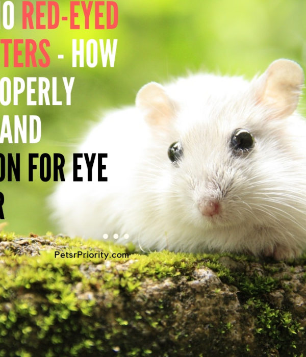 Albino Red-Eyed Hamsters – How To Properly Care and Reason For Eye Color