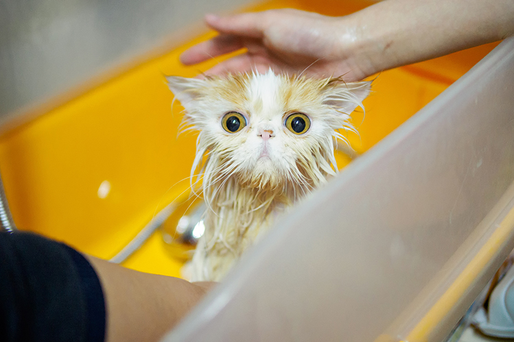 Are cats afraid of water
