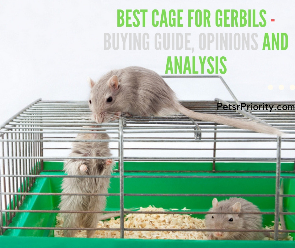 Best Cage for gerbils – Buying Guide, Opinions and Analysis