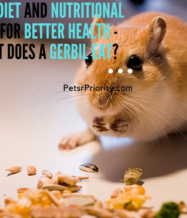 Best Diet and Nutritional Tips For Better Health – What does a Gerbil eat