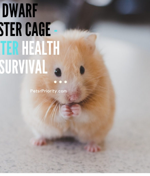Best Dwarf Hamster Cage – Greater Health and Survival