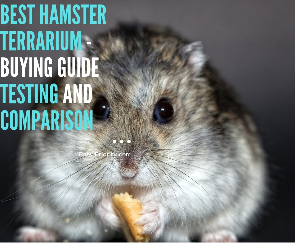 Best Hamster Terrarium – Buying Guide Testing and Comparison