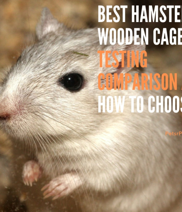 Best Hamster Wooden Cage – Testing Comparison and How to Choose