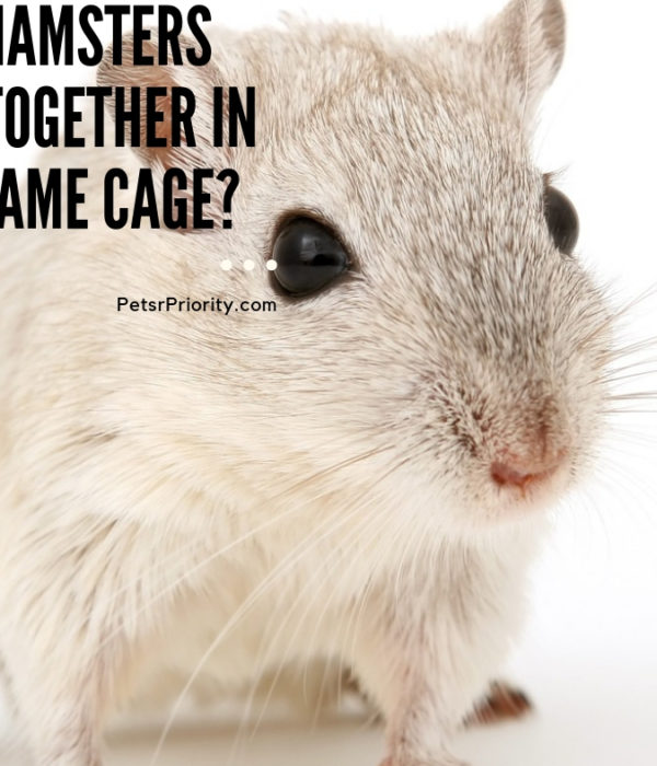 Can Hamsters Live Together in the Same Cage?