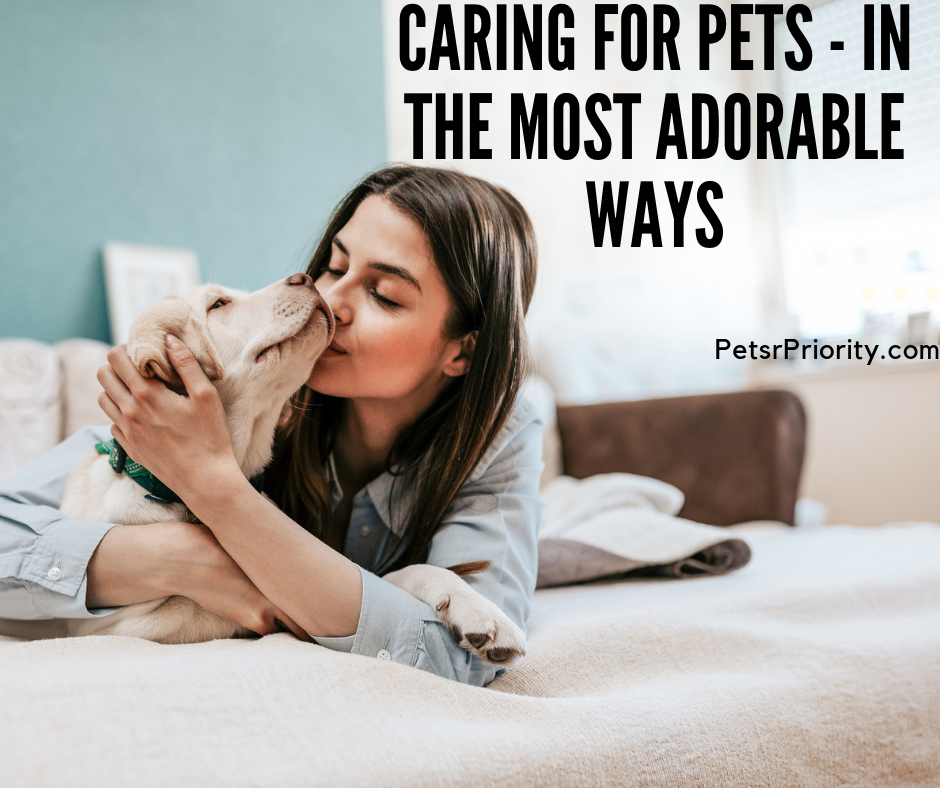 Caring For Pets – In The Most Adorable Ways