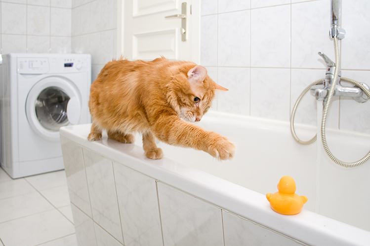 Cat playing in the tub