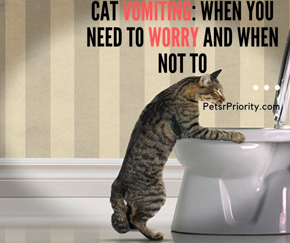 Cat vomiting When You Need To Worry and When Not To
