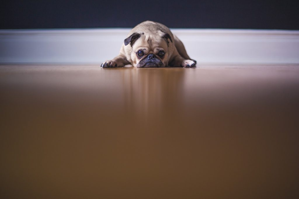 Causes of diarrhea in puppies