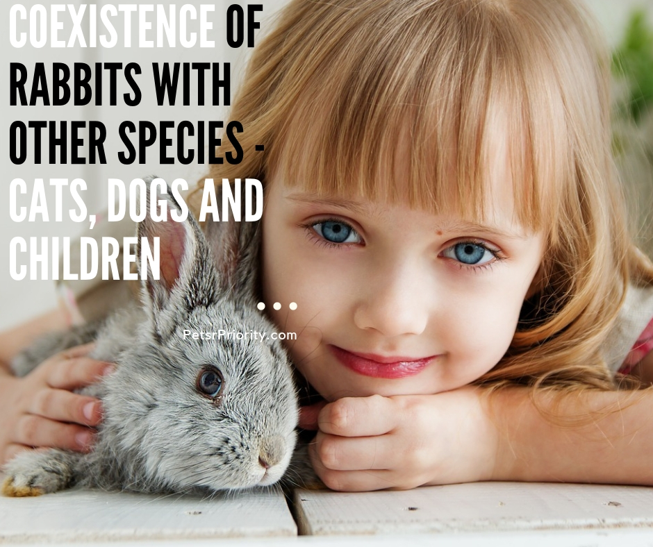 Coexistence of rabbits with other species - Cats Dogs and Children
