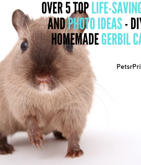 DIY or homemade gerbil cage - Over 5 Top Life-Saving Tips and Photo Ideas