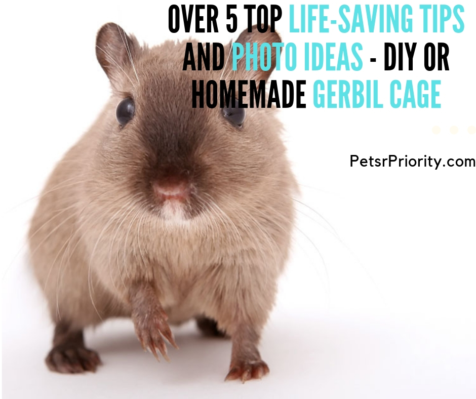 DIY or homemade gerbil cage – Over 5 Top Life-Saving Tips and Photo Ideas