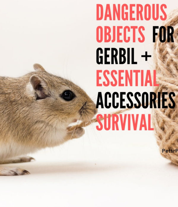 Dangerous objects  for Gerbil + Essential Accessories  For Survival