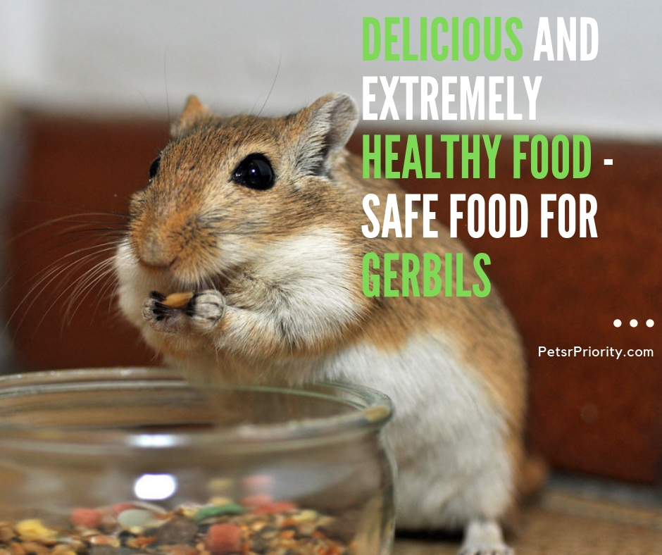 Delicious and Extremely Healthy Food – Safe Food for Gerbils