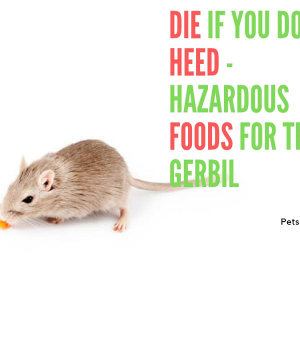Die if You Do not Heed – Hazardous Foods for the Gerbil