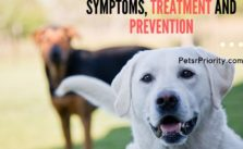 Distemper in Dogs – Symptoms, Treatment and Prevention