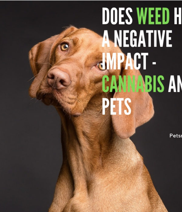 Does Weed Have A Negative Impacts – Cannabis and Pets