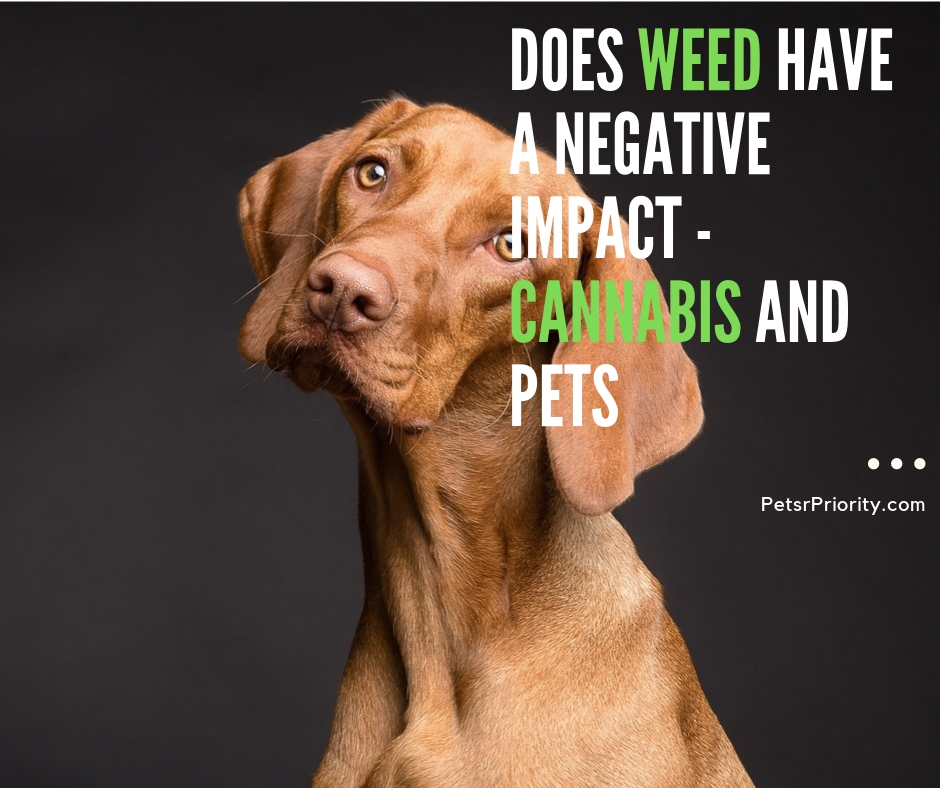 Does Weed Have A Negative Impact - Cannabis and Pets