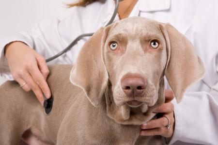 Dog-at-the-vet