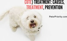 Dog hair loss  (No longer Cute) treatment: Causes, Treatment and Prevention