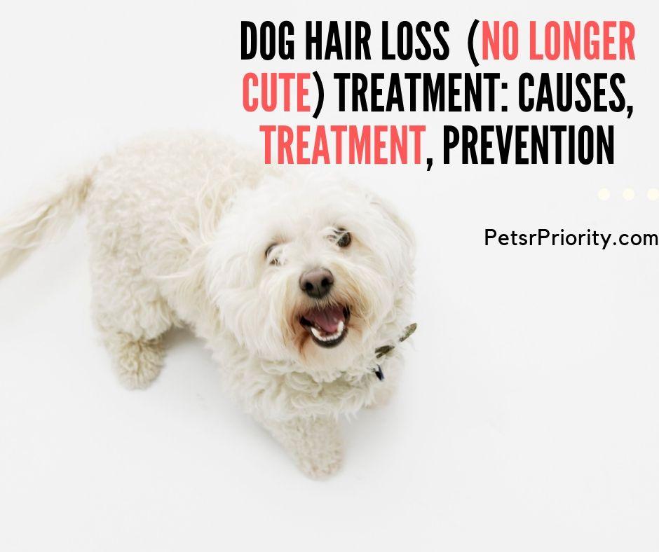 Dog hair loss (No longer Cute) treatment_ causes, treatment, prevention