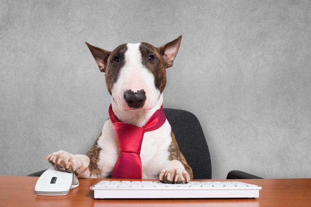 Dog photo a presentation that lacks bite