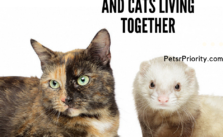 Double Trouble – Ferrets and Cats Living Together