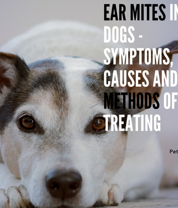Ear Mites in Dogs – Symptoms, Causes and Methods of Treating