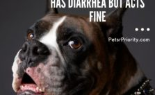 Freaking Me Out!! – Dog Has Diarrhea But Acts Fine