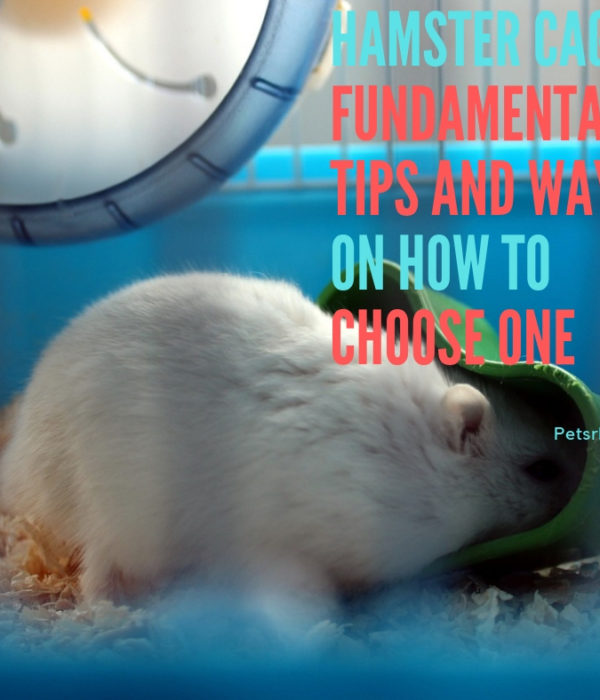 Hamster Cages – Fundamental Tips and Ways on How to Choose One