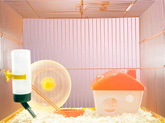 Hamsters and accessories