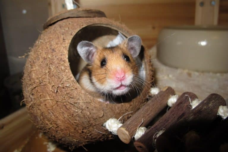 Hamsters love playing and hiding