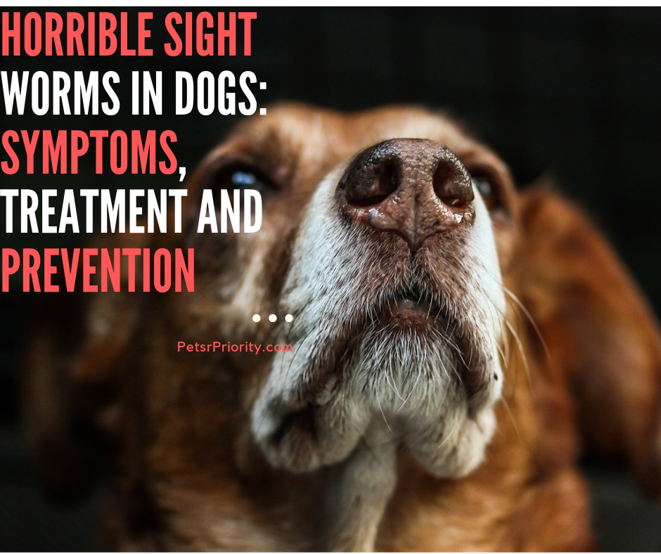Horrible Sights Worms in Dogs Symptoms, Treatment and Prevention
