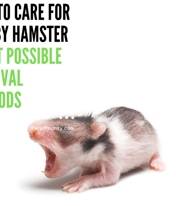 How to Care For a Baby Hamster – Best Possible Survival Methods