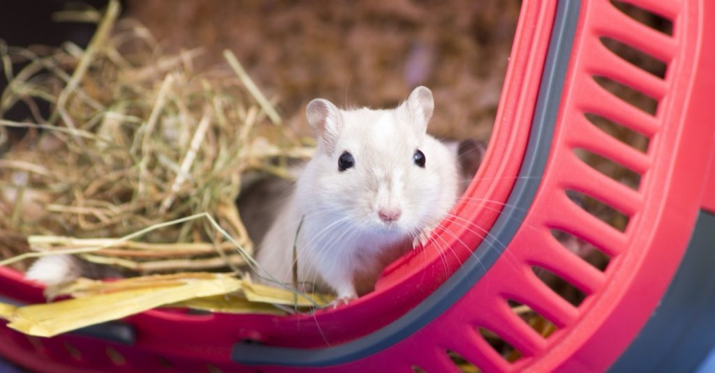 How to choose a good gerbil cage