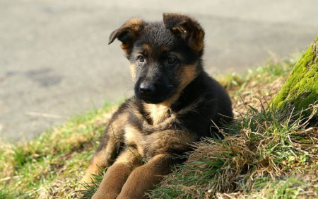 How-to-identify-the-cause-of-diarrhea-With-Your-Puppy
