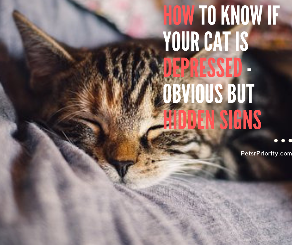 How to know if your cat is depressed - Obvious But Hidden Signs