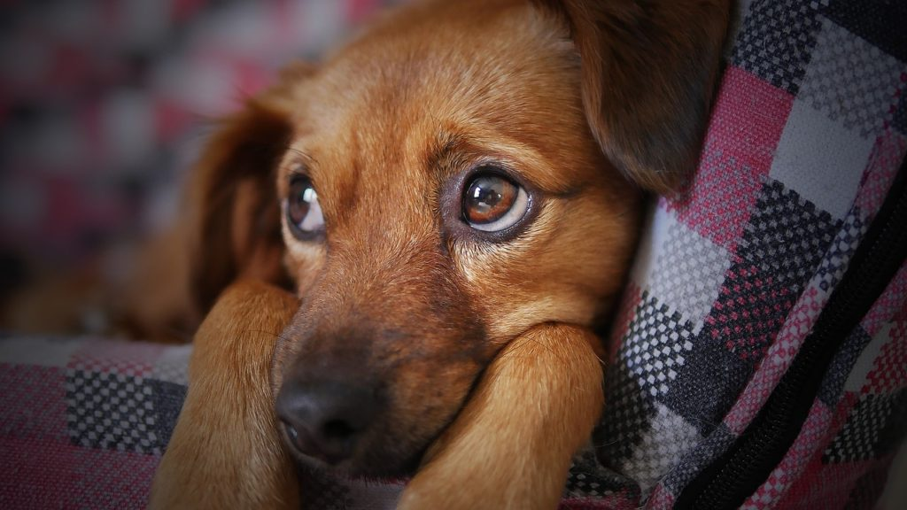 How-to-recognize-the-disease-in-a-puppy