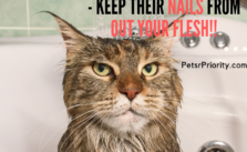 How to wash cats – Keep Their Nails From Out Your Flesh