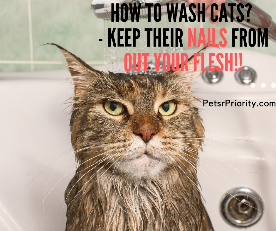 How-to-wash-cats-Keep-Their-Nails-From-Out-Your-Flesh