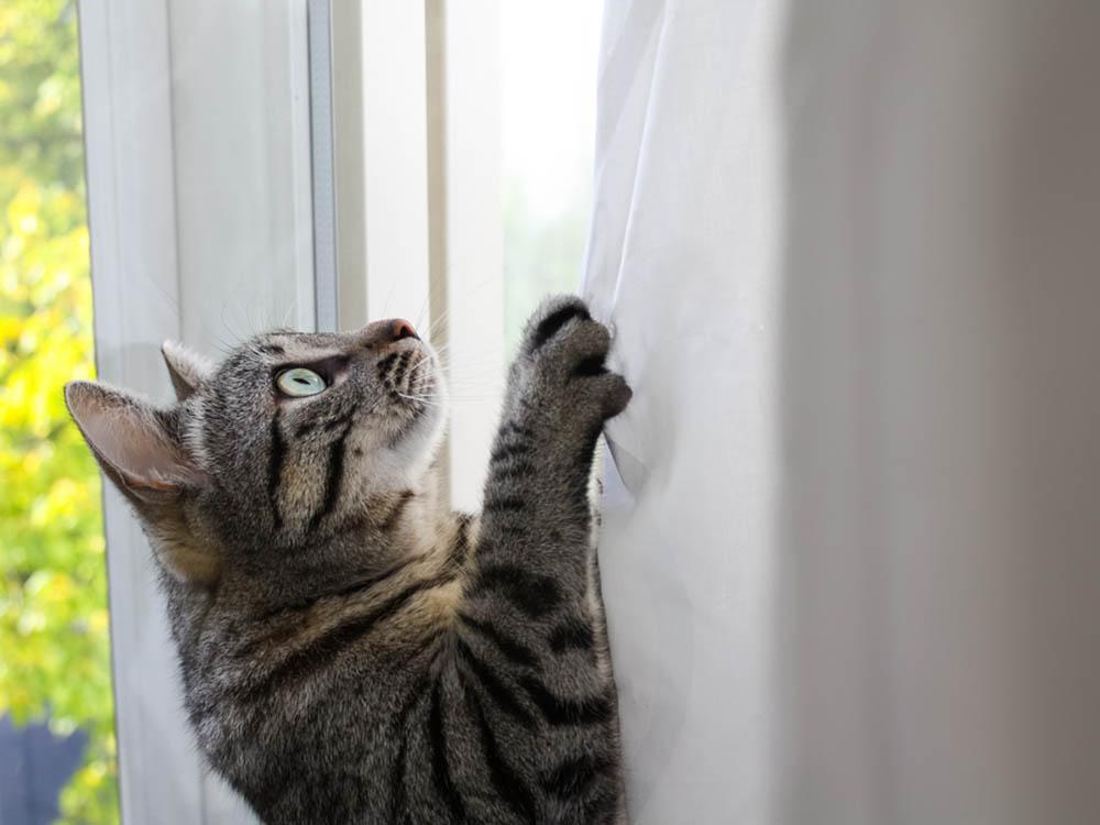 Kitty climbs everywhere