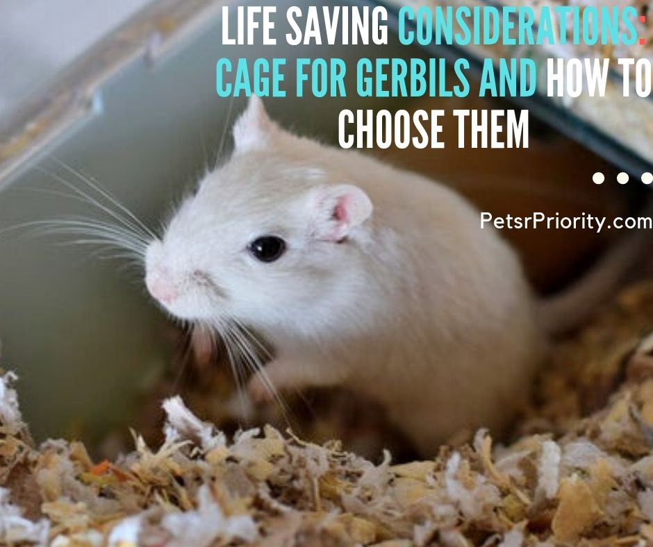 Life-Saving Considerations – Cage for Gerbils and how to Choose Them