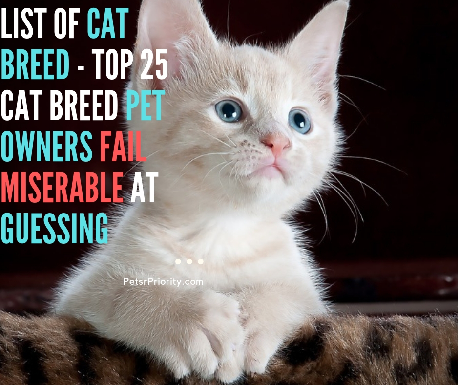 List of cat breed - Top 25 Cat Breed Pet Owners Fail Miserable at Guessing