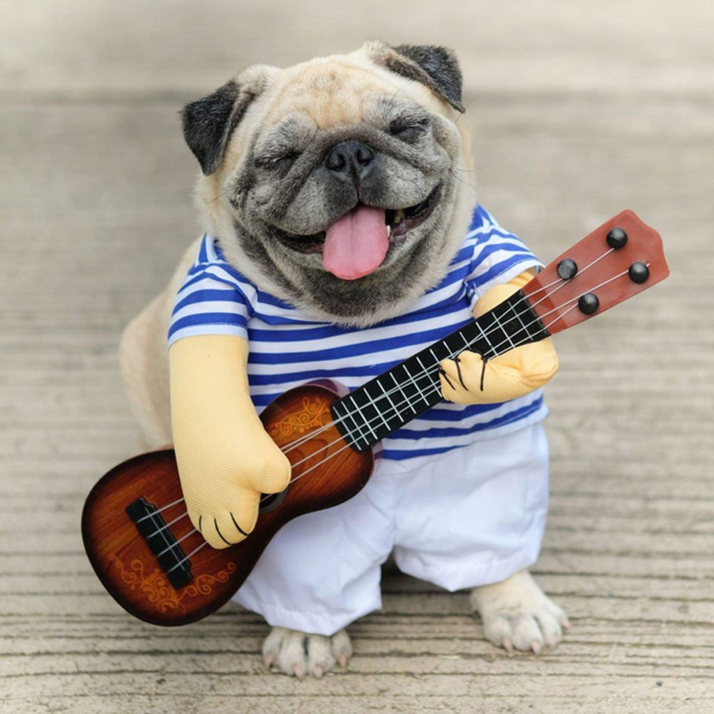 Musician dog dress as a musician