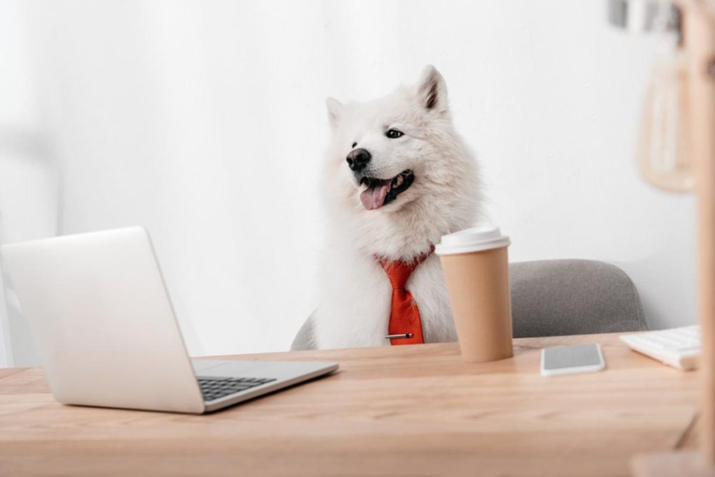 Photo of dog disguised as office worker