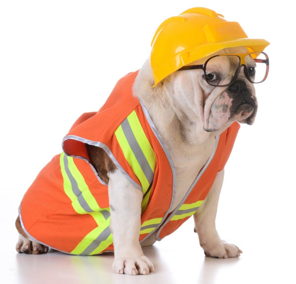 Photo of dog wearing a construction worker disguise